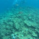 「青の洞窟」青色の綺麗な海で鮮やかな魚がいるダイビング【沖縄県恩納村】